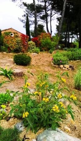 Entrée de propriété avec jardin sec