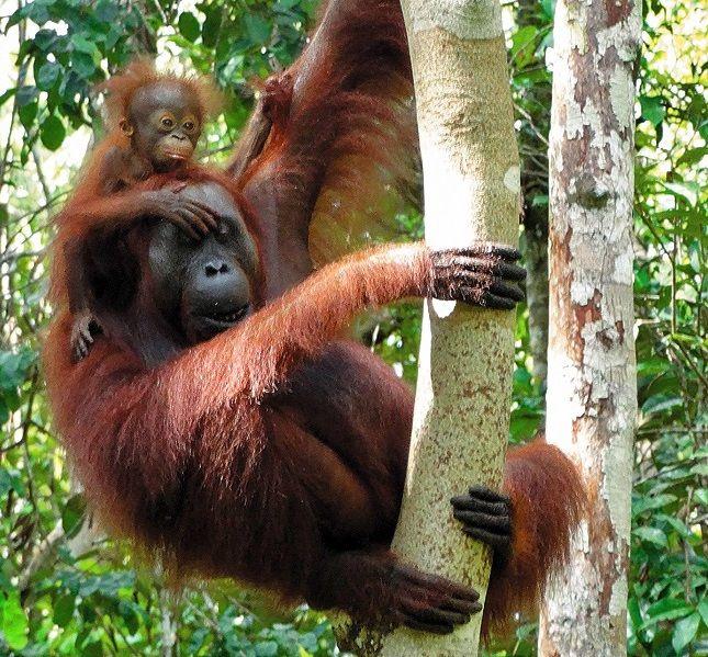 Abattage d'arbre sécurisé